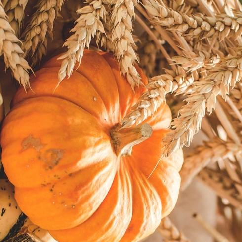 Sonbahar İçin Fit ve Lezzetli Tatlı Tarifleri