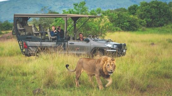 Doğaya Dönüş: Afrika Safari Rehberi