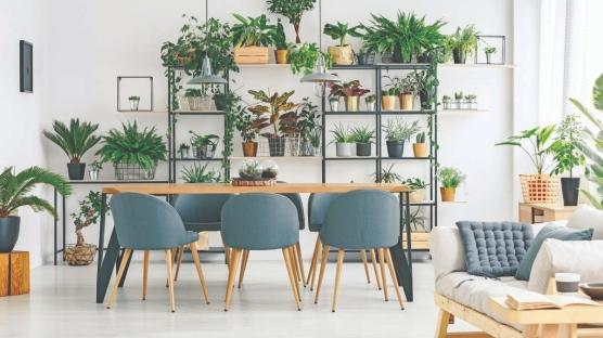 Evinizin Havasını Değiştiren Bitkiler