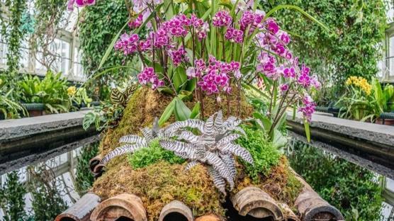New York Botanik Bahçesi'nde Orkide Sergisi