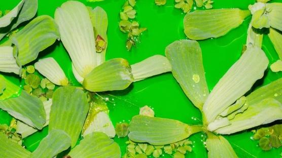 Fondation Beyeler'de Yeşil Suda Sanat